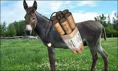 Donkey bomber kills 3 NATO soldiers in Afghanistan