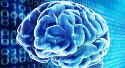 World`s most detailed scans to reveal working of brain