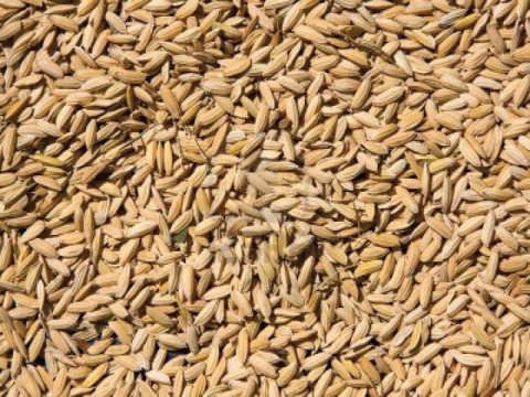 Pakistan imports over 4,000 ton hybrid rice seeds per year